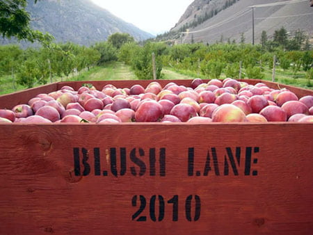 What's coming at the Blush Lane Organic Orchard in Keremeos?