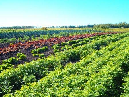 Lund's-Organic-Farm