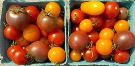 linas-garden-cherry-tomatoes