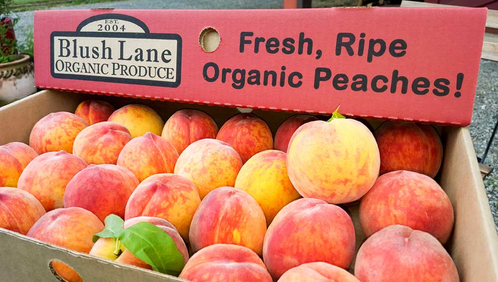 Fresh And Juicy Peaches All Summer Long