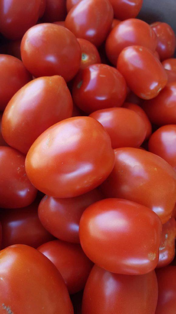 organic roma tomatoes from lina's garden
