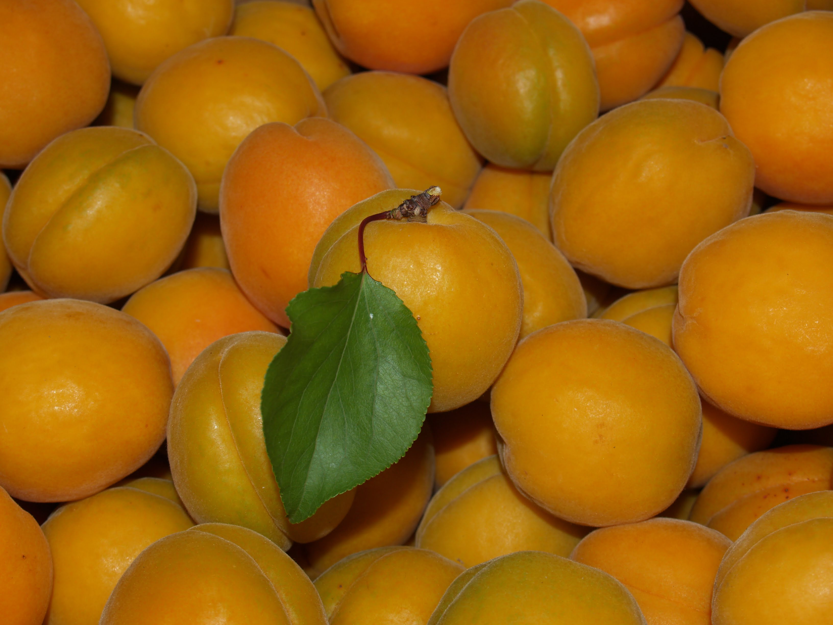 Easy Apricot Preserves