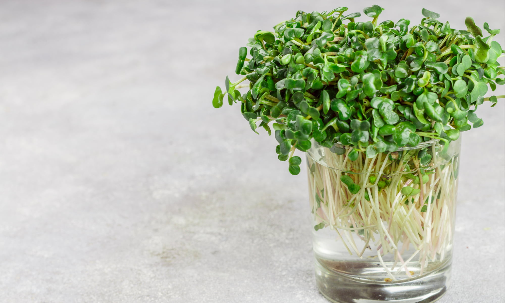 Microgreens: Are They Worth The Extra Penny?