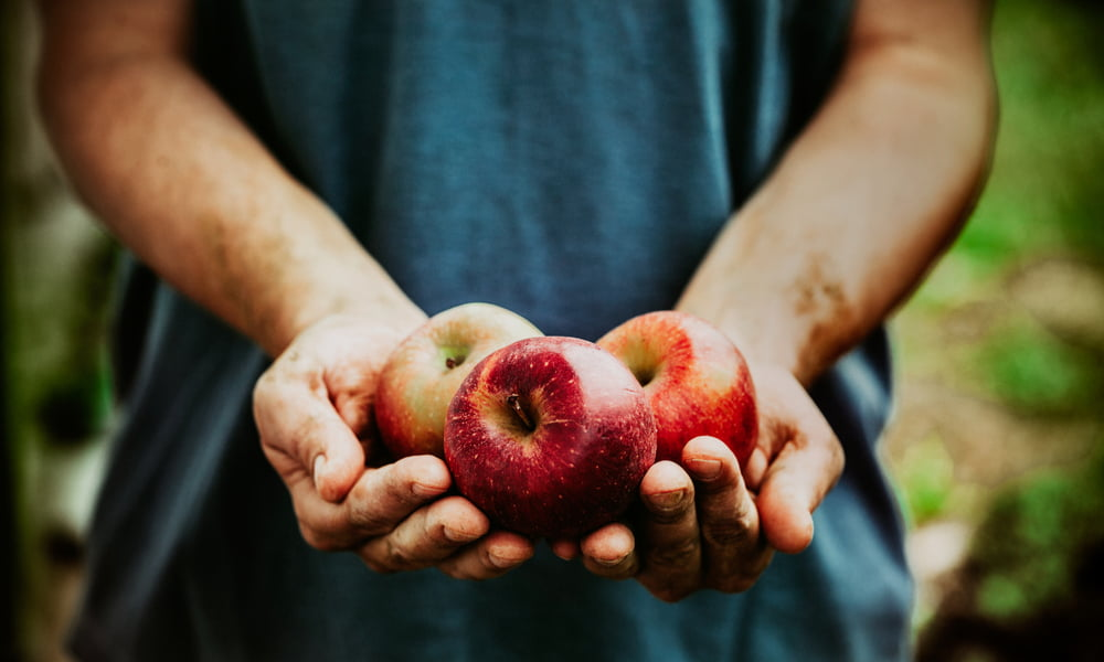 Autumn Apples: What You Need To Know