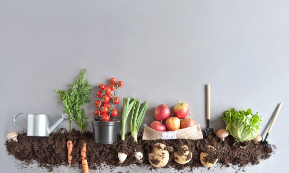 What Organic Means To Blush Lane