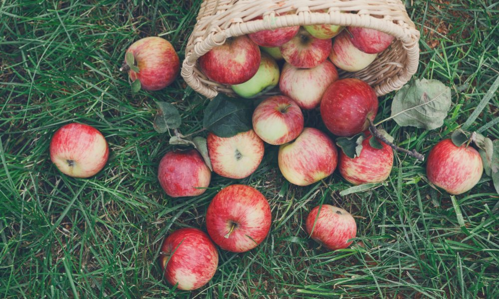 The Blush Lane Orchard: Where The Magic Happens