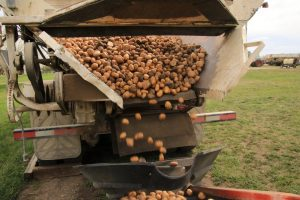 Poplar Bluff Potatoes